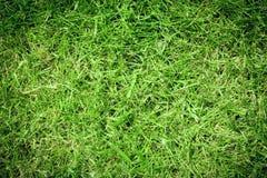 Gramado da grama verde Imagem de Stock Royalty Free