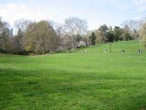Gramado de Central Park Foto de Stock