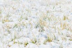 Gramado dos cristais de gelo Foto de Stock