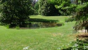 Gramado e árvores verdes em um parque calmo video estoque