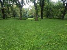 Gramado e árvores verdes no parque no verão fotos de stock royalty free