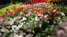 Gramado fresco com flores video estoque