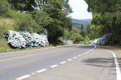 gramado hortensias drogowych Fotografia Stock