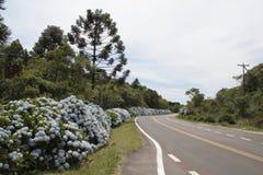 gramado hortensias drogowych Fotografia Royalty Free