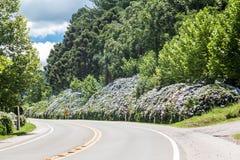 gramado hortensias drogowych Zdjęcie Royalty Free