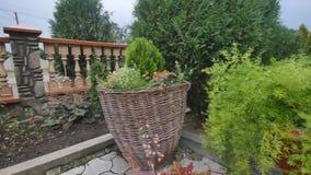 Gramado Manicured com os arbustos decorativos no quintal da casa de campo no verão vídeos de arquivo