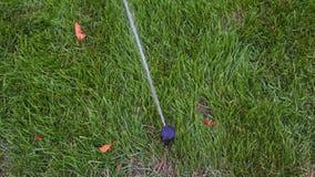 Gramado molhando do sistema de extinção de incêndios da irrigação do jardim no parque perto da passagem Sistema de irrigação de g vídeos de arquivo