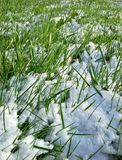 Gramado nevado Imagens de Stock Royalty Free
