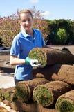 Gramado novo fêmea de Laying Turf For do jardineiro de paisagem imagem de stock