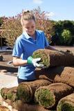 Gramado novo fêmea de Laying Turf For do jardineiro de paisagem fotografia de stock royalty free