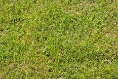Gramado verde Fotografia de Stock