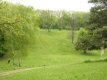 Gramado verde Foto de Stock