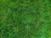 Gramado verde-claro da grama, vista superior fotos de stock royalty free
