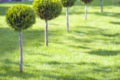 Gramado verde com grama brilhante em um parque da cidade com árvores decorativas em um dia de verão ensolarado Área de repouso bo Fotografia de Stock Royalty Free