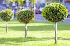 Gramado verde com grama brilhante em um parque da cidade com árvores decorativas em um dia de verão ensolarado Área de repouso bo Imagens de Stock Royalty Free