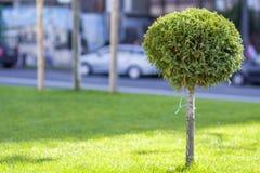Gramado verde com grama brilhante em um parque da cidade com árvores decorativas em um dia de verão ensolarado Área de repouso bo Imagem de Stock
