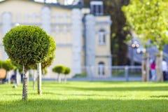 Gramado verde com grama brilhante em um parque da cidade com árvores decorativas em um dia de verão ensolarado Área de repouso bo Foto de Stock