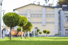 Gramado verde com grama brilhante em um parque da cidade com árvores decorativas em um dia de verão ensolarado Área de repouso bo Imagem de Stock Royalty Free