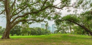 Gramado verde do parque da cidade imagens de stock