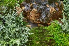 Gramado verde em um jardim formal ajardinado colorido Fotos de Stock