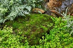 Gramado verde em um jardim formal ajardinado colorido Imagens de Stock