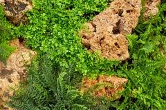 Gramado verde em um jardim formal ajardinado colorido Foto de Stock