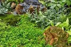 Gramado verde em um jardim formal ajardinado colorido Imagem de Stock Royalty Free