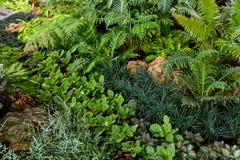 Gramado verde em um jardim formal ajardinado colorido Fotografia de Stock Royalty Free