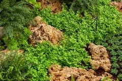 Gramado verde em um jardim formal ajardinado colorido Fotos de Stock Royalty Free