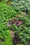 Gramado verde em um jardim formal ajardinado colorido Fotografia de Stock