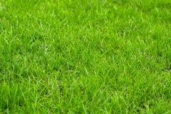 Gramado verde, grama não segada fotografia de stock royalty free