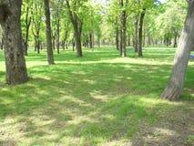 Gramado verde no parque Gramado verde com árvores na primavera Imagens de Stock Royalty Free