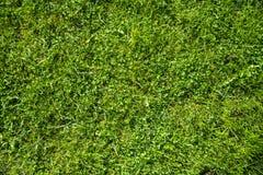 Gramado verde para o fundo do quintal da casa nave foto de stock