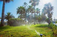 Gramados molhando na jarda com grama verde e palmas no fundo imagens de stock royalty free