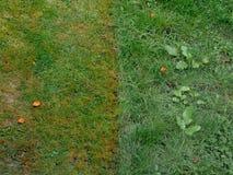 Gramados vizinhos em mal estado weeds imagens de stock