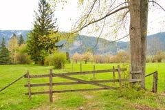 Gramas e cerca douradas da exploração agrícola Fotos de Stock