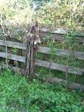 Gramas e cerca douradas da exploração agrícola Foto de Stock