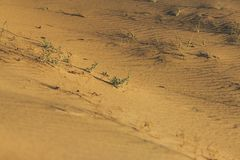 Gramas pequenas na areia nas dunas foto de stock