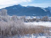 Gramas secadas e Montains nevado do vale de Paradise em Montana fotografia de stock
