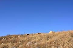Gramas secas e rocha Imagem de Stock