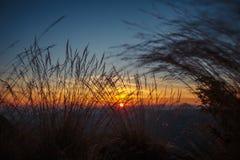 Gramas selvagens na paisagem dourada do por do sol do verão Imagem de Stock Royalty Free