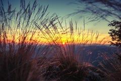 Gramas selvagens na paisagem dourada do por do sol do verão Fotos de Stock