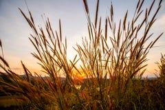 Grame com o sol 6 Fotos de Stock Royalty Free