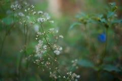 Grame a flor Foto de Stock