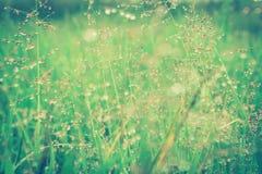 Grame a flor com gotas de orvalho após o fundo fresco da natureza da chuva Imagem de Stock Royalty Free