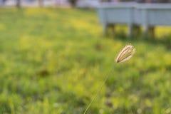 Grame a flor no vento com fundo borrado imagem de stock