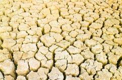 Grame o crescimento no campo da seca, terra da seca Fotografia de Stock Royalty Free