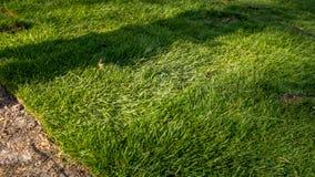 Grame o grama nos rolos prontos para ser usado jardinando ou ajardinando Imagens de Stock Royalty Free