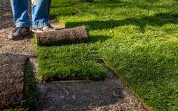 Grame o grama nos rolos prontos para ser usado jardinando ou ajardinando Foto de Stock