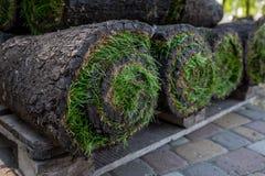 Grame o grama nos rolos prontos para ser usado jardinando ou ajardinando Fotografia de Stock Royalty Free